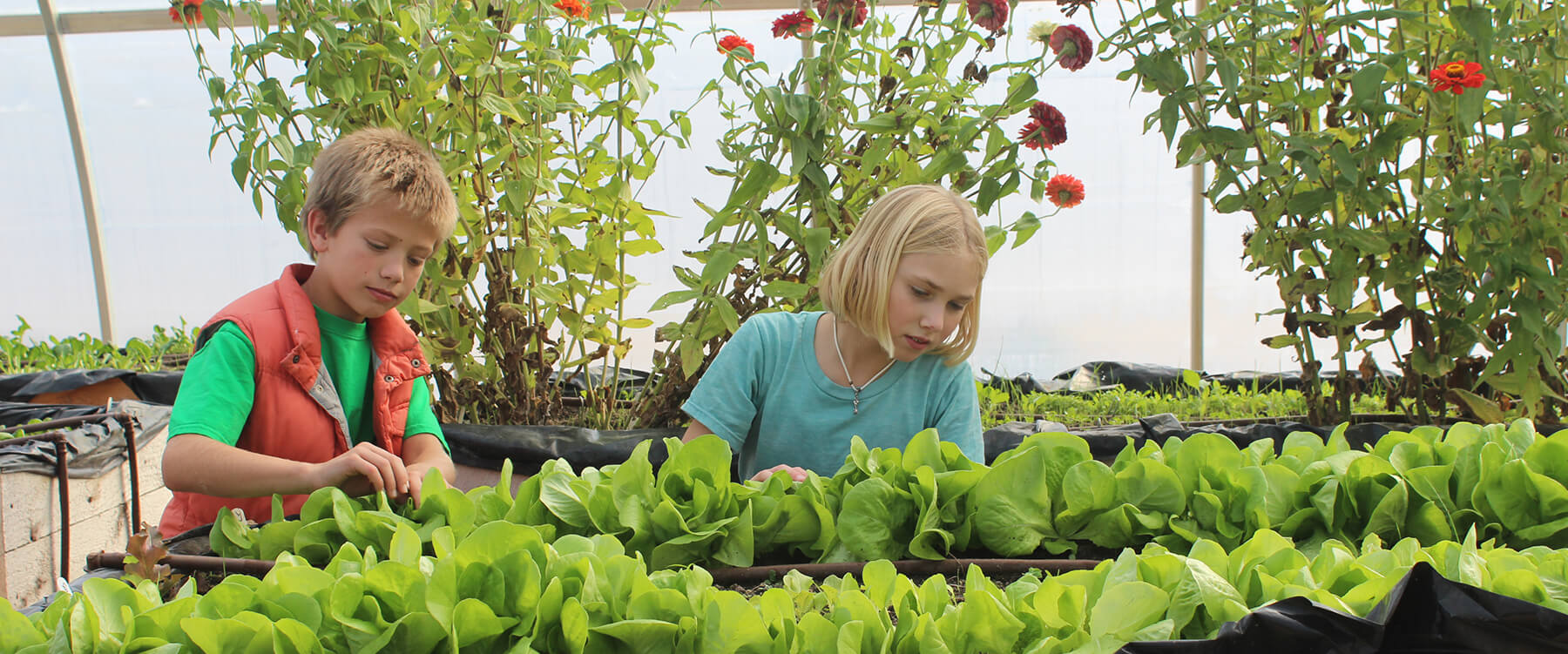 Ada Christian Integrated Outdoor Education Growing in the Greenhouse